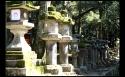 Allée de lanternes, Nara